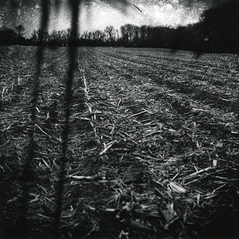 Untitled, from the series Instinct and the Garden