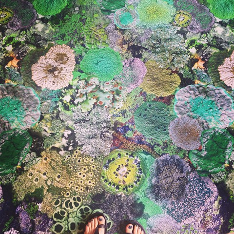 Natural Camouflage Lichen Fabric