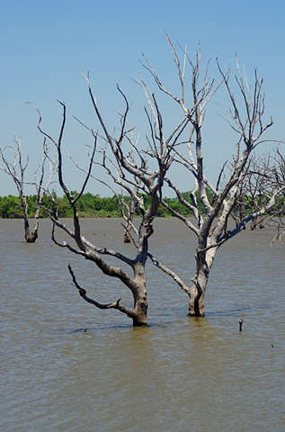 Drowned Trees