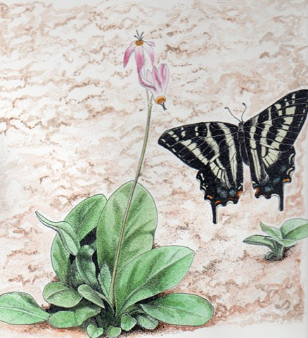 Shooting Star & Swallowtail Butterfly