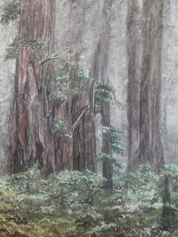 California Redwoods, Pastel drawing