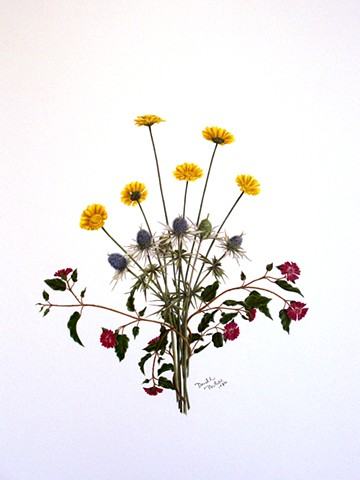 David Phillips Art, Wildflower Drawings, DavidPhillipsArt.com, Mexican Thistle, Desert Marigold, Trailing Four-O'clock