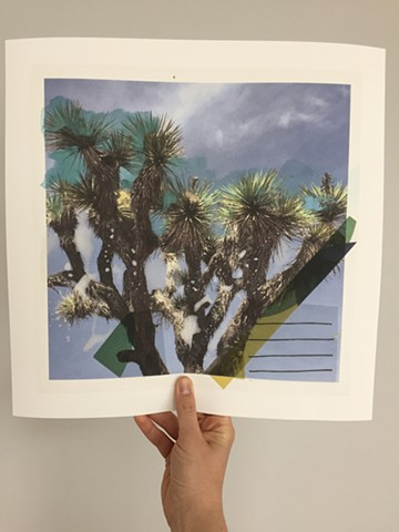 "Joshua Tree with lines. 14"" x 14"" prints now available. Printed on acid-free, 100% cotton, Somerset Enhanced Velvet paper."