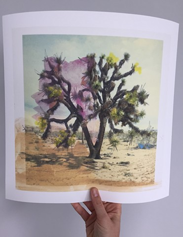 "Joshua Tree. 14"" x 14"" prints now available. Printed on acid-free, 100% cotton, Somerset Enhanced Velvet paper."