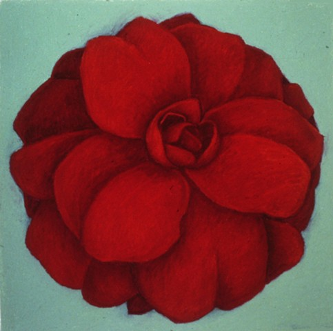 Red Rose on Turquoise