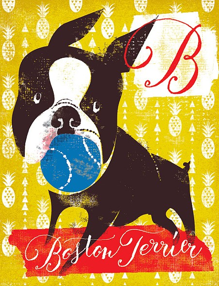 B Is For Boston Terrier B is for Boston Terrier
