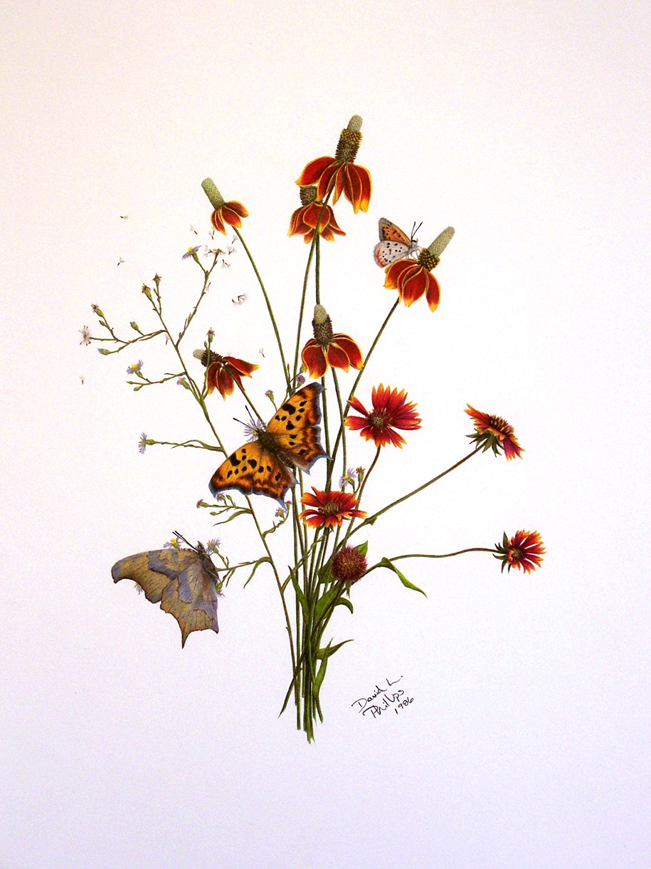 David Phillips Art