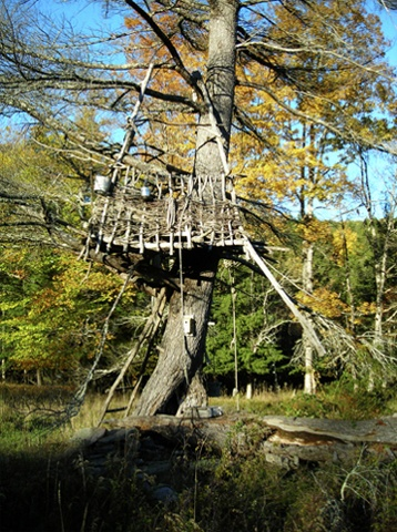 Tree House at Mildred's Lane