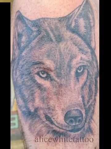 Alice White - Wolf Portrait, black and gray tattoo, Provincetown tattoo, Cape Cod tattoo, Ptown tattoo, truro tattoo, wellfleet tattoo, custom tattoo, coastline tattoo