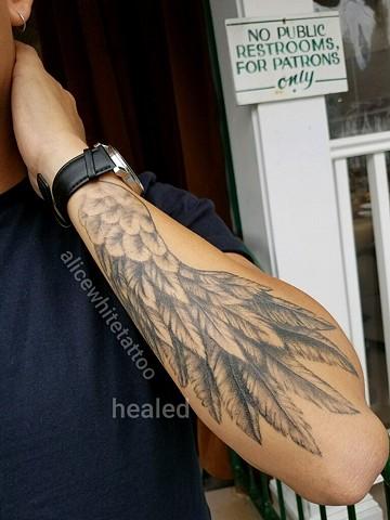 Wing, feather, black and grey, healed, Alice White, Provincetown tattoo, Cape Cod tattoo, Ptown tattoo, truro, wellfleet, custom tattoo, coastline tattoo