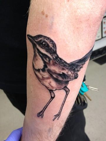 Tina Marie DeCarlo - bird tattoo,  Provincetown tattoo, Cape Cod tattoo, Ptown tattoo, truro tattoo, wellfleet tattoo, custom tattoo, coastline tattoo