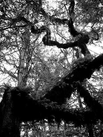 The Zig-Zag Tree I