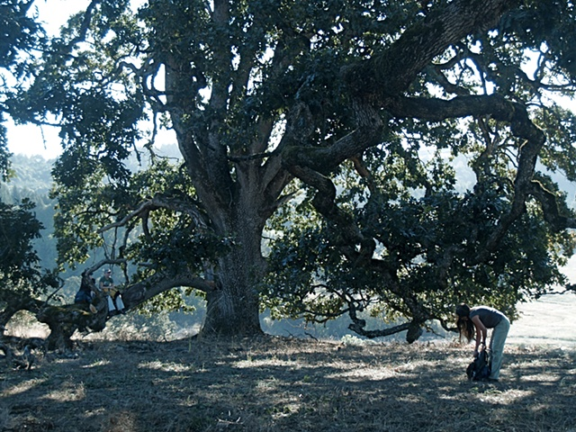 Under the Oregon Oak