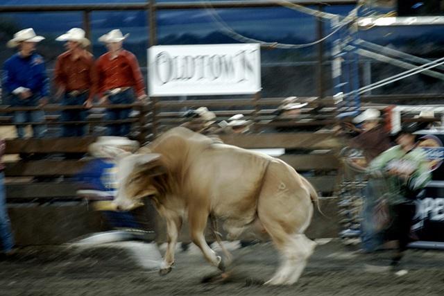 A Lotta Bull