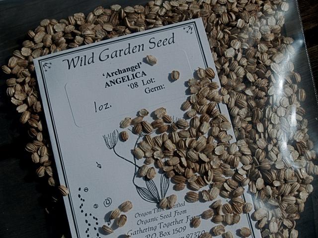 Wild Garden Angelica