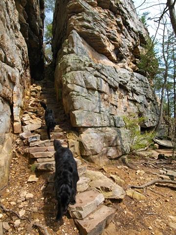 Stone Door Dogs