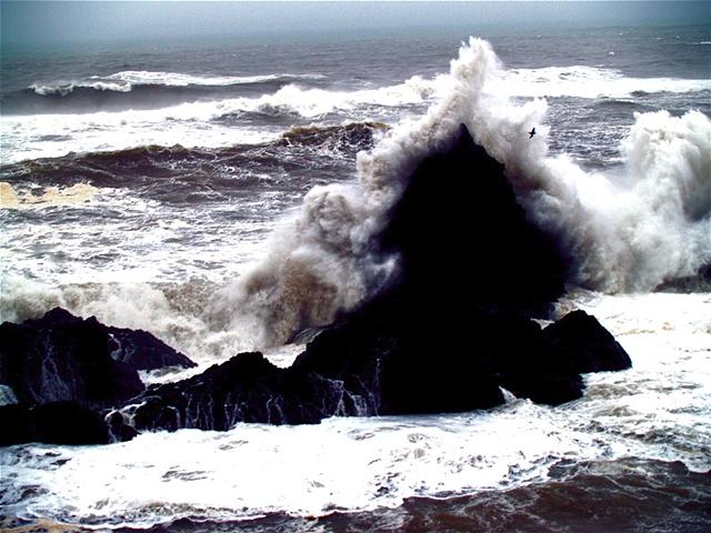 Cormorant in Wave I