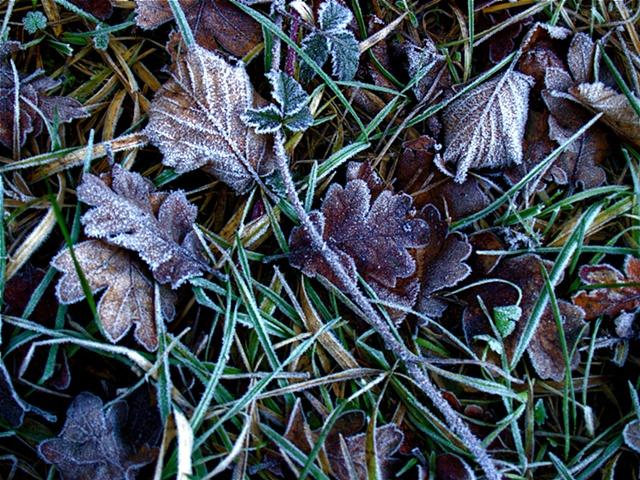 An Early Frost II