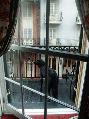 French Quarter Dio