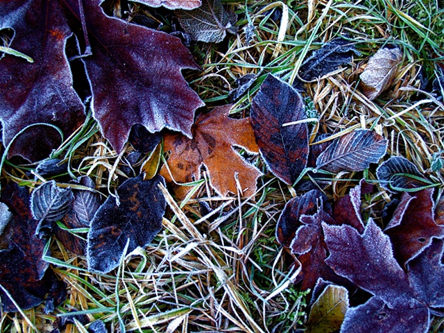 An Early Frost I