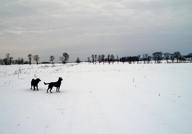 Strasburg in Winter