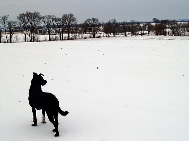 Fletcher in Winter