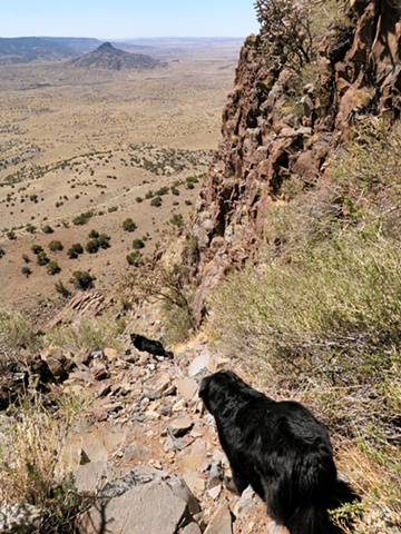 Dogs Descending Cabezon
