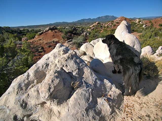 Bowie in the Garden of the Gods