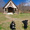 Log Church Dogs
