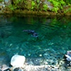 A Swim Opal Creek