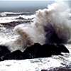 Cormorant in Wave II