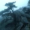 Rainy Appalachian Trail