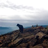 Mount Hood Bowie