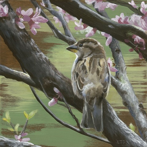 Sparrows of Spring 2