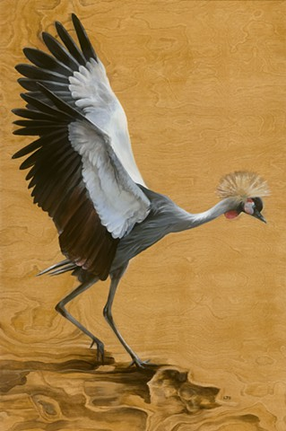 Gray Crowned Crane