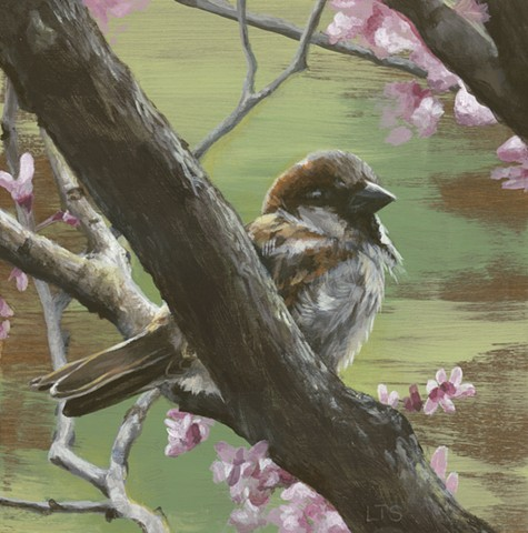 Sparrows of Spring 1