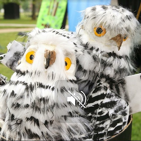 Snowy Owls Puppets