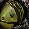 The Green Moray Eel Puppet