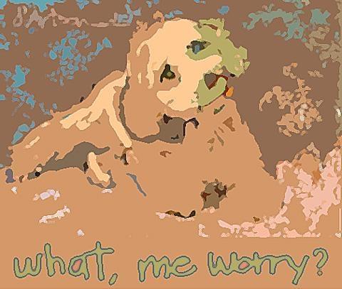 dog gone politics