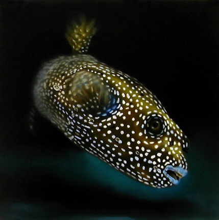 Dog-faced Boxfish