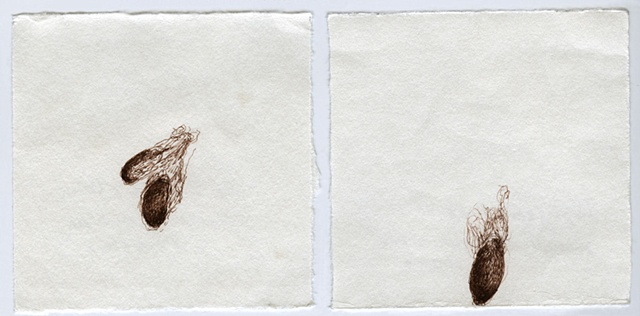 Cotton (diptych)