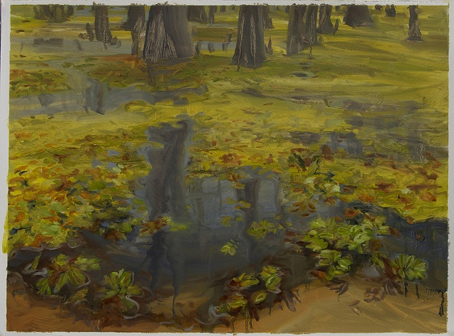 Study for Giant Salvinia, Caddo Lake #3