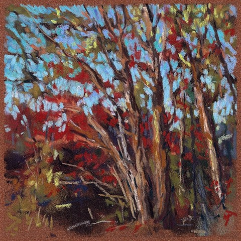 River Trees Evening Light_6x6