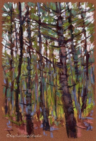 Pastel drawing Maine woods
