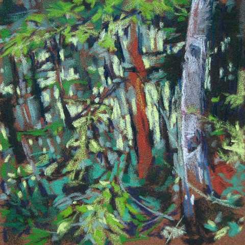 Maine woods trees pastel hiking