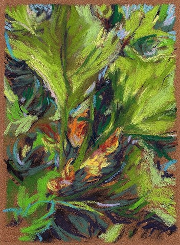 Not Yet (Squash Blossoming)_7x5