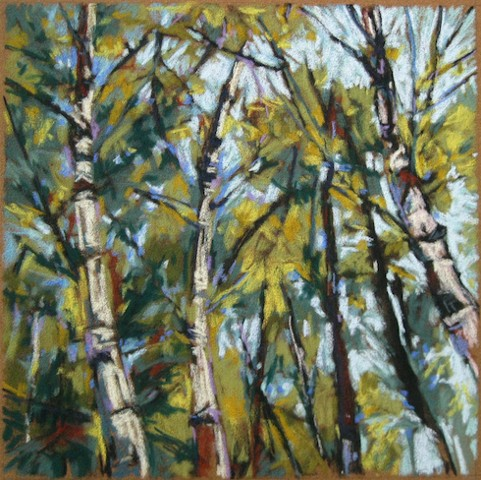 pastel birch trees landscape