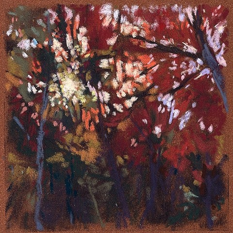 Late Sun Through Trees _6x6