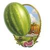 Melon Vignette