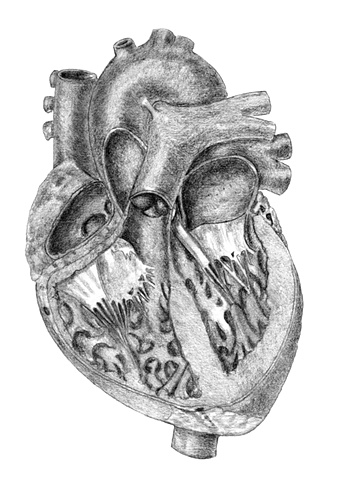Medical Illustration Fig 6